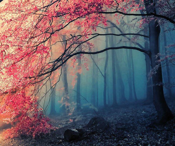 Bosque bonito