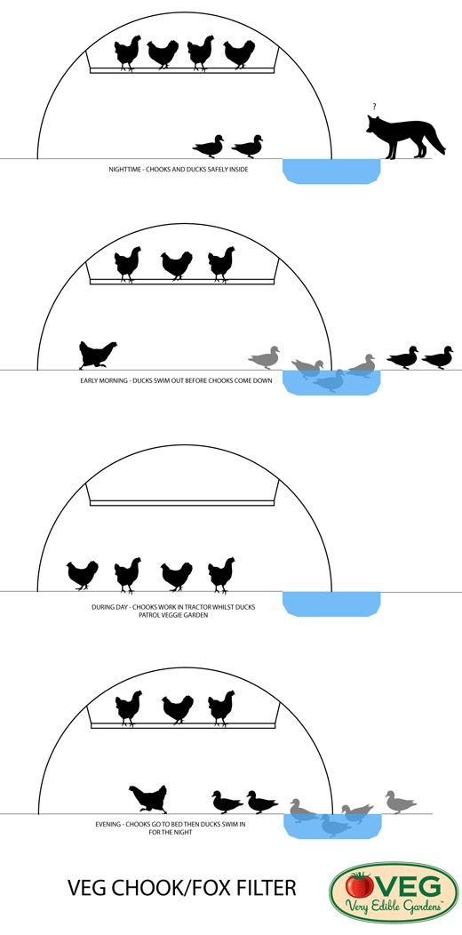 VEG Design Solutions, Part One: the Chicken/Fox Filter Permaculture Research Institute