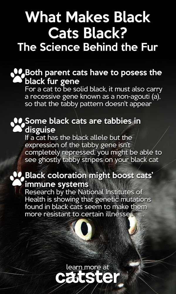 The science behind the fur! (Most of my black cats have been black tabbies, but my current black cat is a true solid black.)