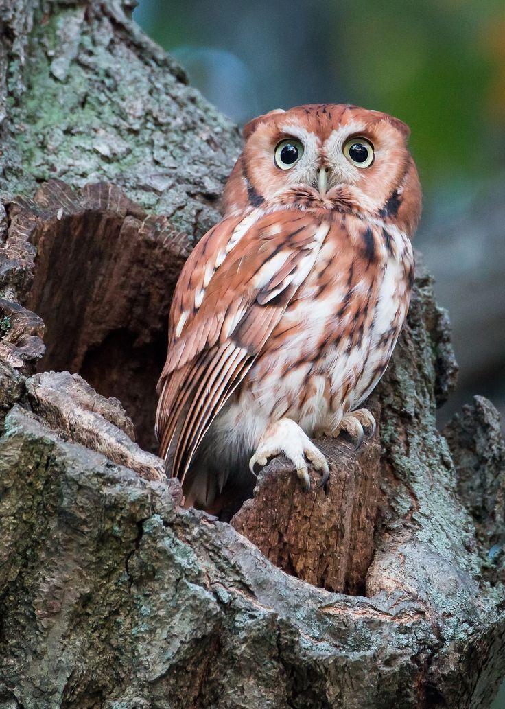 Owl 57 74 best OWLS im...