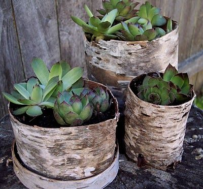 I'd rethink plastic pots if I had birch to cover them in!