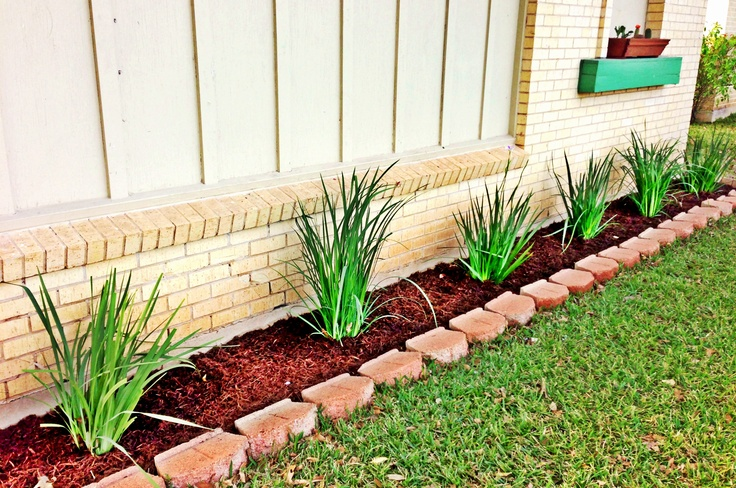 Texas Native Cypress mulch with African Iris = my happy new front flower bed