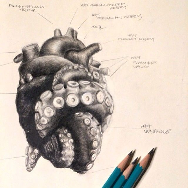 Tentacle heart. #graphite #kraken #octopus #drawing #art #sketching #tentacle