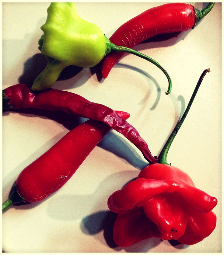 Gift of Nature, #rose of #pepper   #rovinj #tipico #croatia #vegetables #food