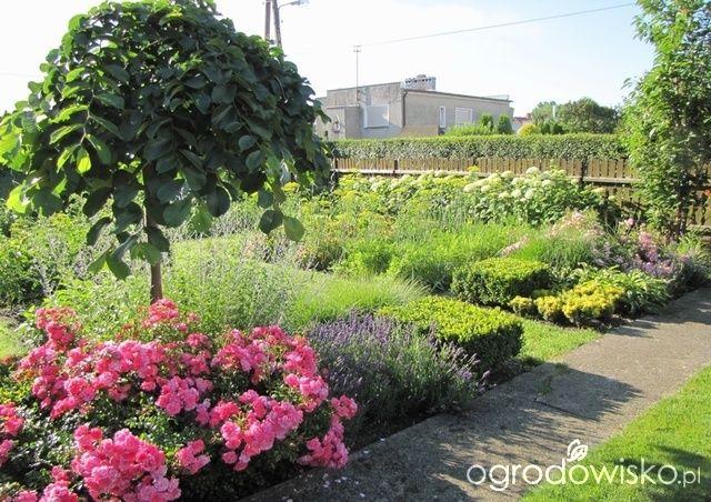 Pokażę nasz ogród - strona 288 - Forum ogrodnicze - Ogrodowisko