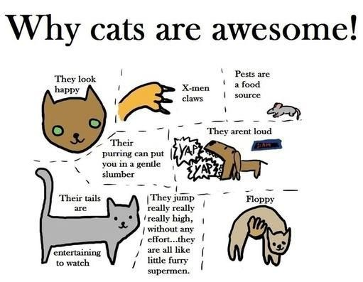 Why cats are awesome!Stuff, Awesome, Catlady, Funny, Crazy Cat, Things, Kitty, Cat Lady, Animal