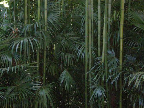 la bambouseraie d 39 anduze conseils pour cr er un jardin exotique sous nos climats les jardins. Black Bedroom Furniture Sets. Home Design Ideas