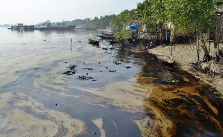 Oil spill in Bangladesh threatens aquatic animals