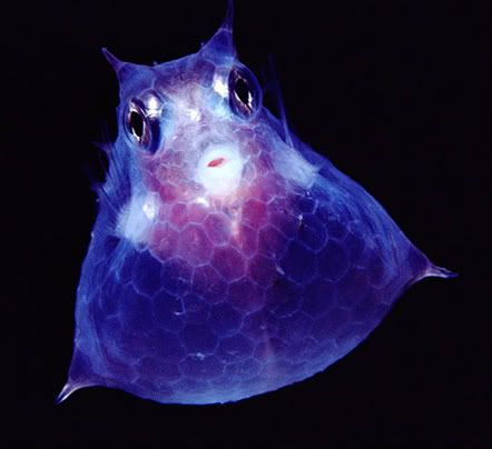 peixes abissais - Pesquisa Google
