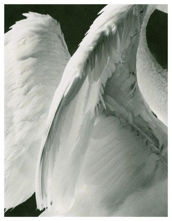 Anjos                                                       …