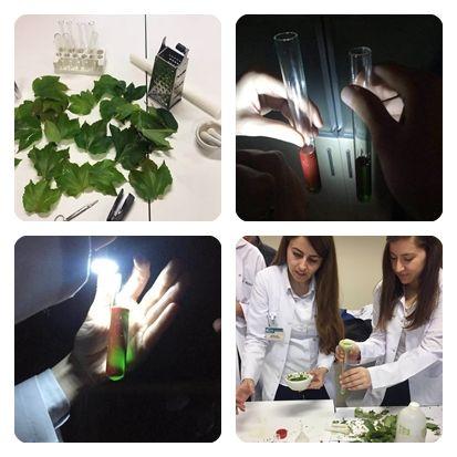 Özel Mürüvvet Evyap Koleji ve Fen Lisesi 11. sınıf öğrencileri ile Biyoloji dersinde fotosentez konusu işlendikten sonra bitkilere yeşil rengi veren klorofil molekülünün floresans etkisi gözlemlendi. Deneyde kullanılacak olan yapraklar okulumuz bahçesinden toplandı. Laboratuvarda yapraklardan elde edilen klorofil çözeltisine karanlık ortamda ışık verilerek renk değişimi gözlemlendi. Öğrencileri yeşil rengin ışık etkisi ile kırmızıya dönüşümü etkiledi.