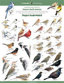 Print the bird identification chart & hang up next to the window. Makes it easy for kids to identify birds! I love this version because it has male & female examples together if they differ.