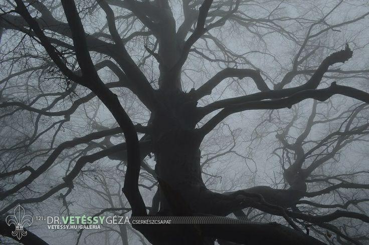http://vetessy.hu/galeria/2014/Teli-cserkesztabor---Hidegkuti-Turistahaz/2-nap/49/view