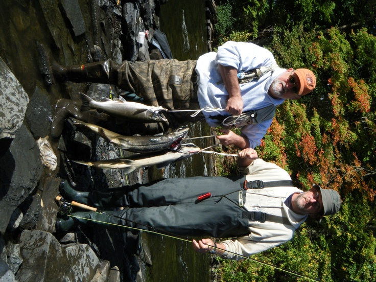 13 best salmon fishing pulaski ny images on pinterest for Best time for salmon fishing in pulaski ny