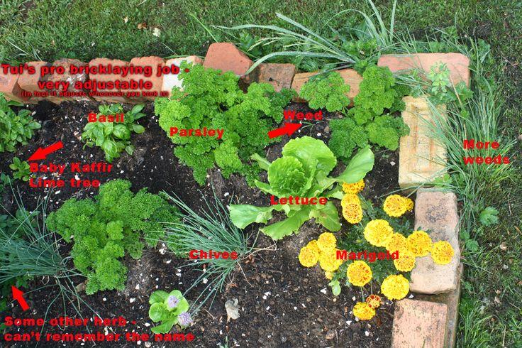 "A corner of my little vege garden. I call it my ""salad bar"""