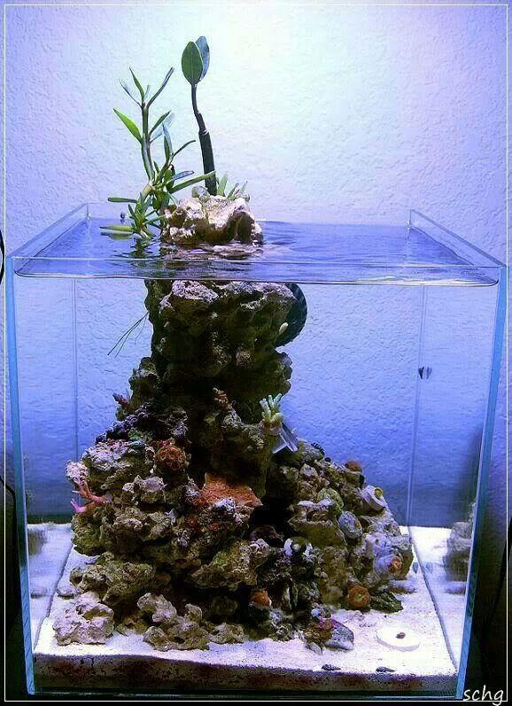 Pin By Roberto Lopez On Reef Tanks Aquarium Coral Reef Aquarium