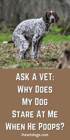 We all know that dogs do this, but there is a very interesting reason why!!