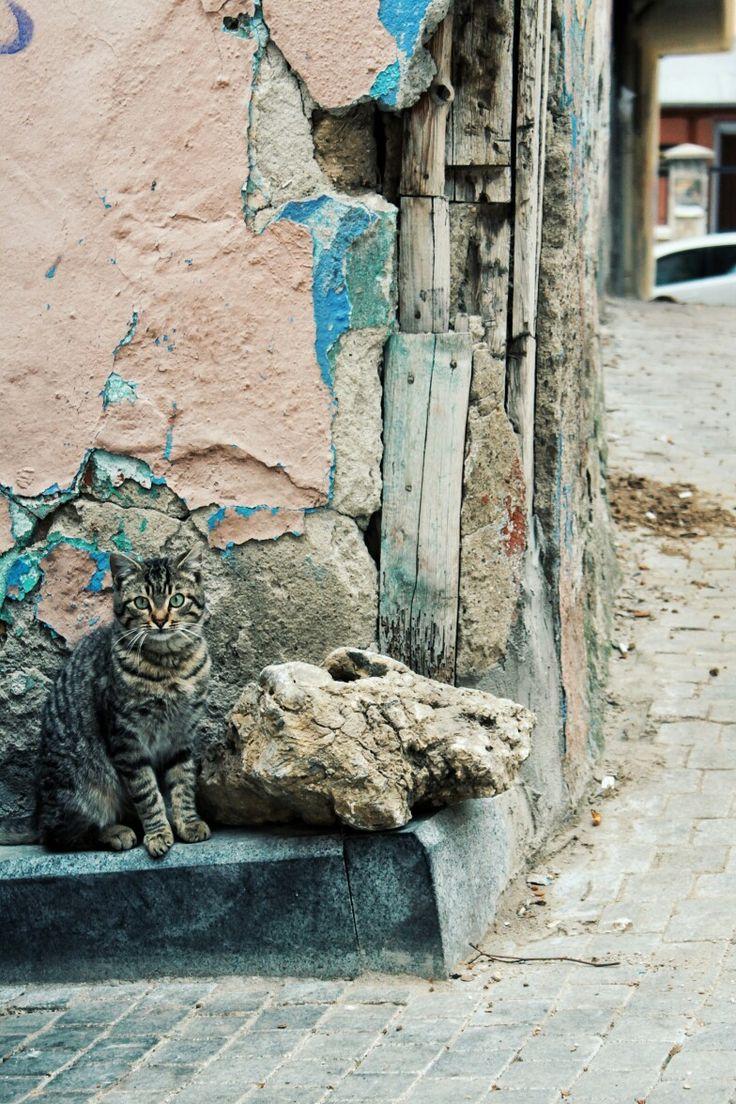 Kedi askim Bursa tophane