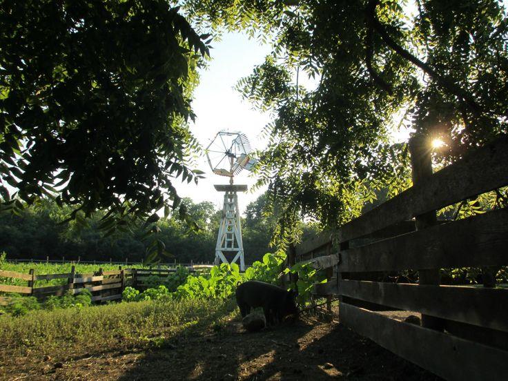 15 best Schaumburg il images on Pinterest | Chicago, Schaumburg ...