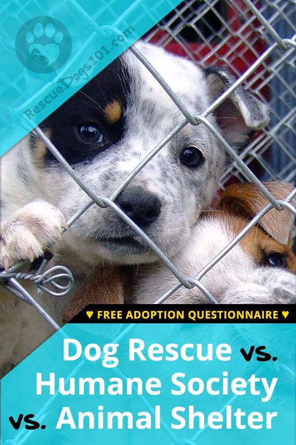 Humane Society Vs Animal Shelter Vs A Dog Rescue Rescue Dogs Humane Society Animal Shelter