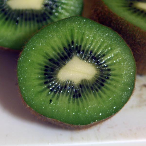 Kiwi bird cut in half - photo#2