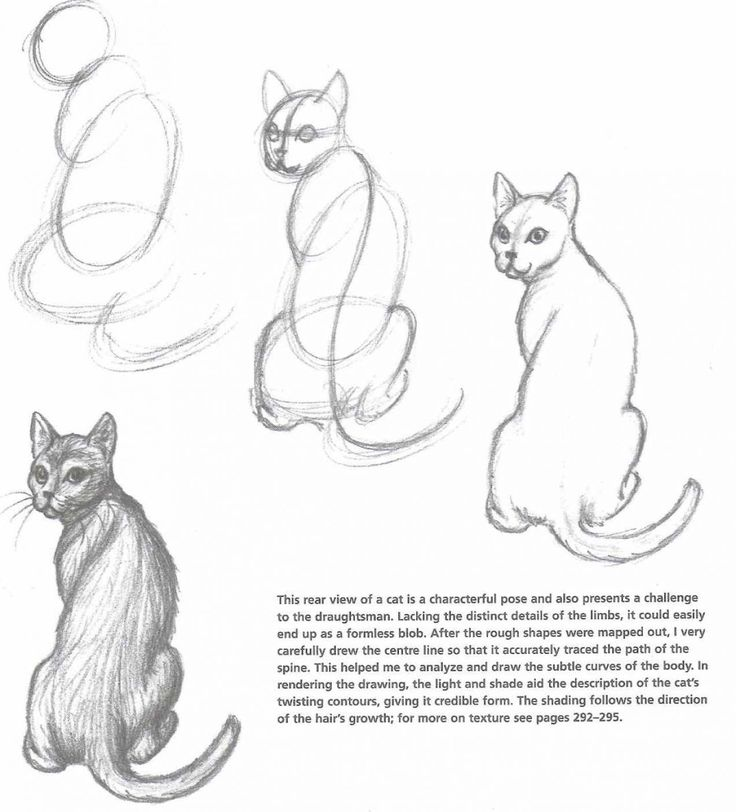 how to draw a cat 4