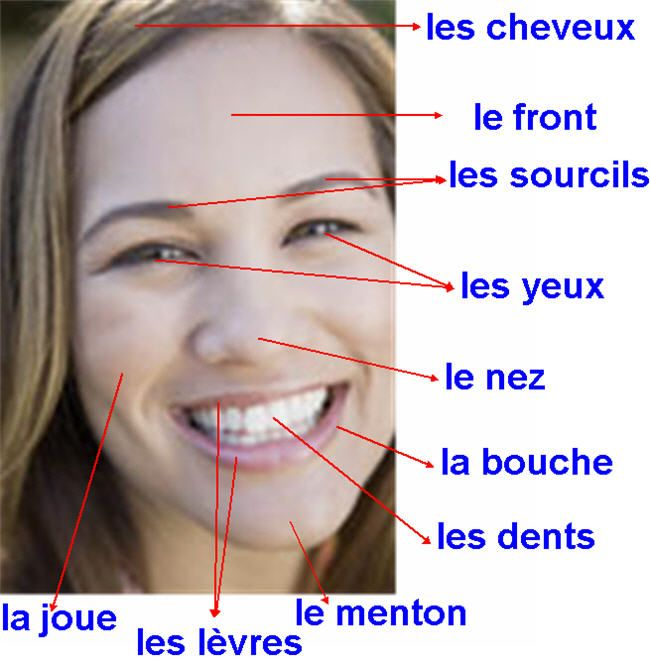 Le visage  Visit the French Lessons Brisbane website here at http://www.frenchlessonsbrisbane.com.au/french-lessons-for-adults to learn more about Skype French lessons and other French language class opportunities as well http://www.frenchlessonsbrisbane.com.au/