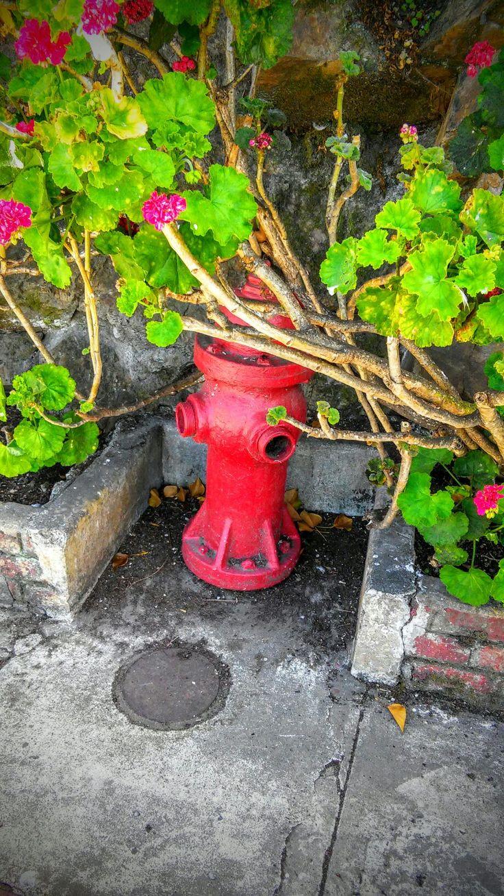 Alcatraz. #red #brightandcolorful
