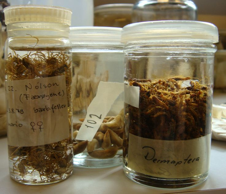 inspiring or facinating? A lot of insects in jars.