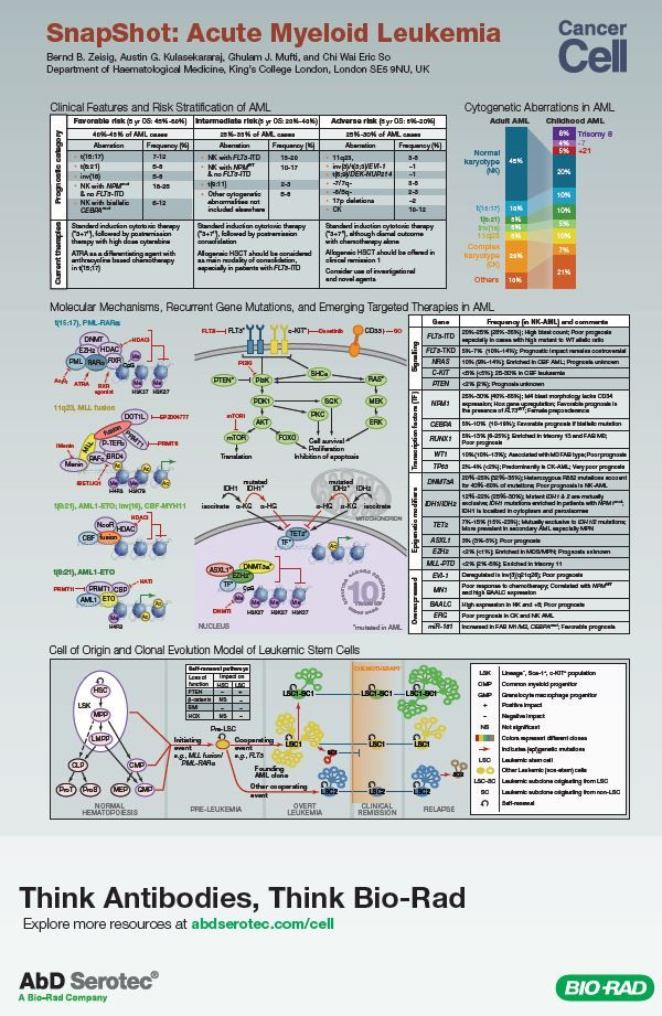 """The """"SnapShot: Acute Myeloid Leukemia"""" poster provides an overview of AML risk stratifications, frequency and types of genetic alterations, as well as current therapies."""