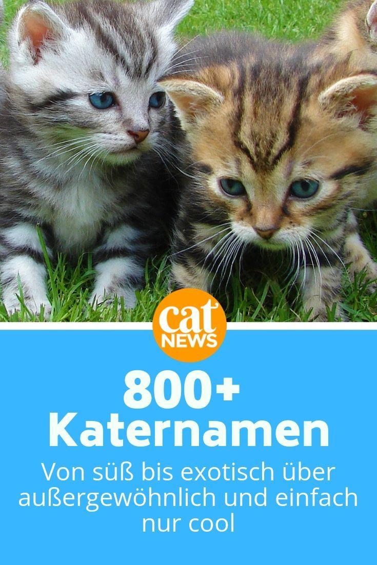 Katernamen Von A Z Die Liste Fur Mannliche Katzen 800 Mit