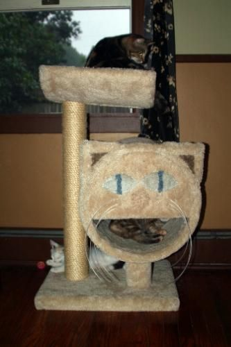 (click Twice For Updated Pricing And More Info) Molly And Friends Two Tier  Scratching Post #scratching_posts Http://www.plainandsimpledeals.com/prou2026