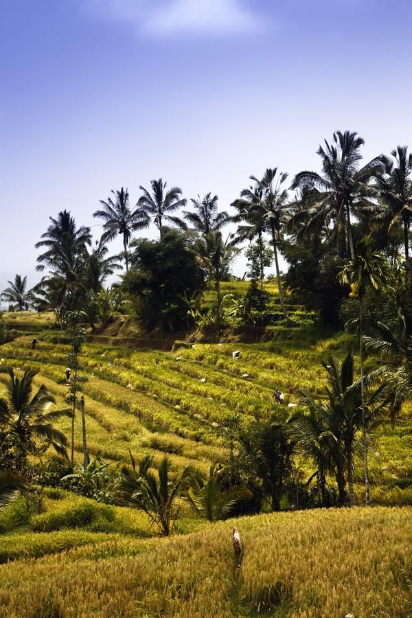 Bali, Indonesia - the best honeymoon in Bali http://holipal.com/the-best-honeymoon-in-bali/