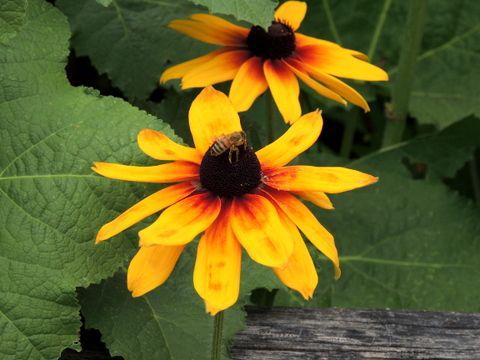 Flor en Alto Adiege