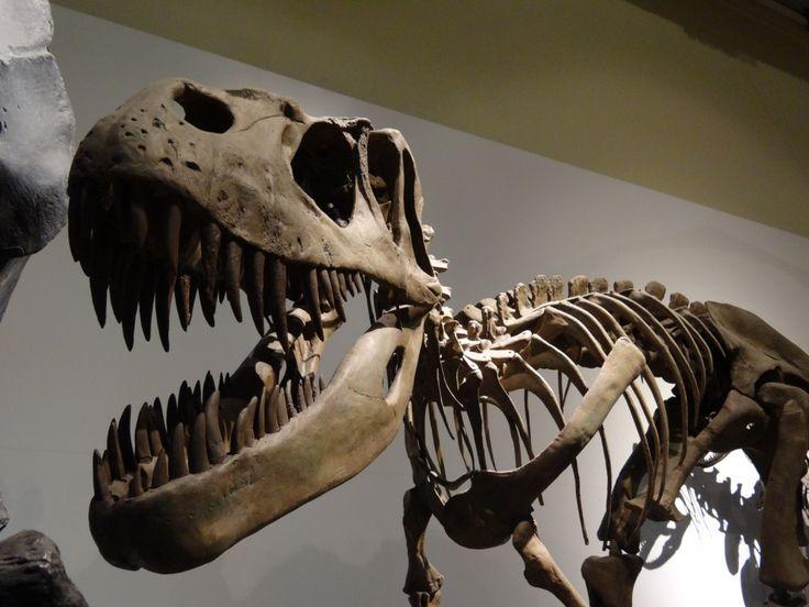 El Museo Nacional de Ciencias Naturales de Madrid reúne una amplia representación de la fauna mundial. Este es uno de los museos más visitados por los turistas que vienen a Madrid, así como por los…