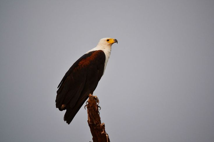 The birds of prey in Botswana - http://blog.relaischateauxafrica.com/the-magical-world-of-birds-your-how-where-why-guide/
