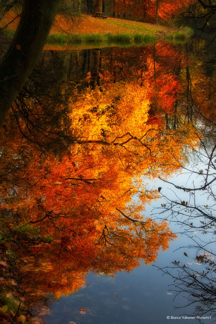 Autumn colored leave reflections in the water