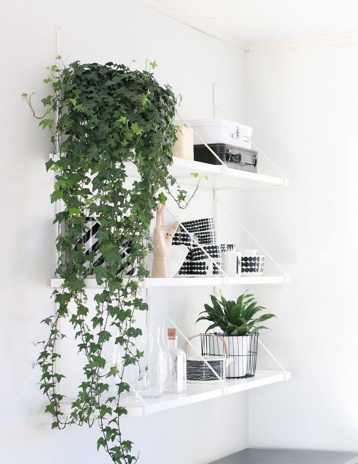 Efeu Zimmerpflanze 37 besten house plants bilder auf zimmerpflanzen