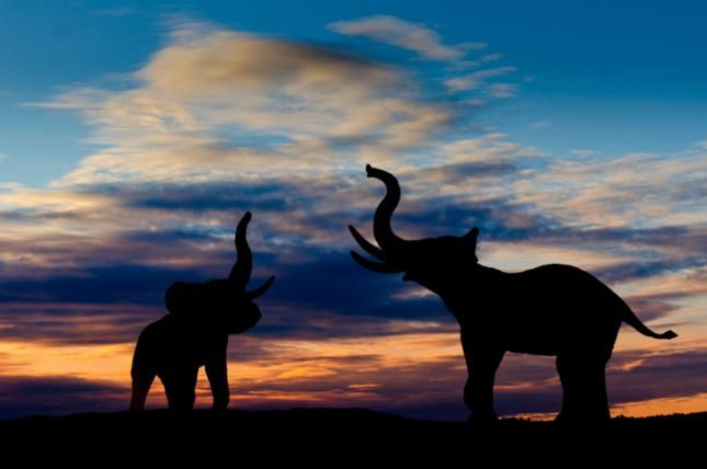 ¿Sabes diferenciar un elefante africano de un elefante asiático? - Batanga