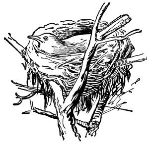 bird in nest, vintage clipart, black and white clip art