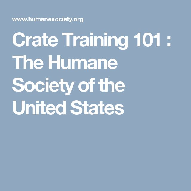 Crate Training 101 : The Humane Society of the United States