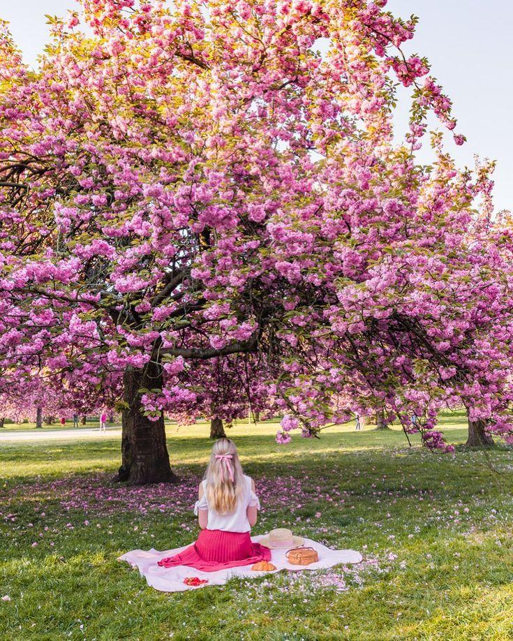 Cherry Blossoms In Parc De Sceaux Paris Paris In April Spring In Paris Picnic Photography