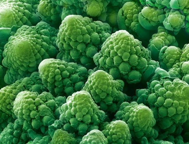 Amazing Scanning Electron Microscope Picture! The head of a Romanesco cauliflower.