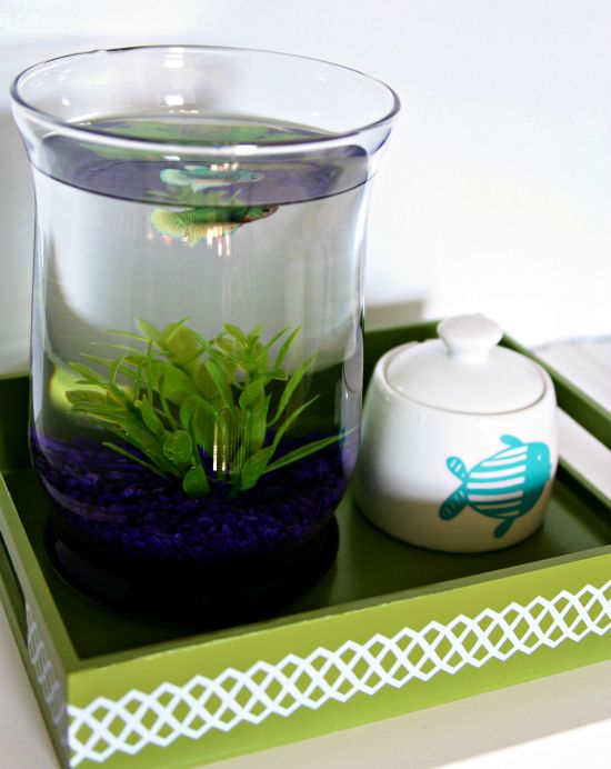 A sweet fish station home pinterest fish betta and for Beta fish bowl