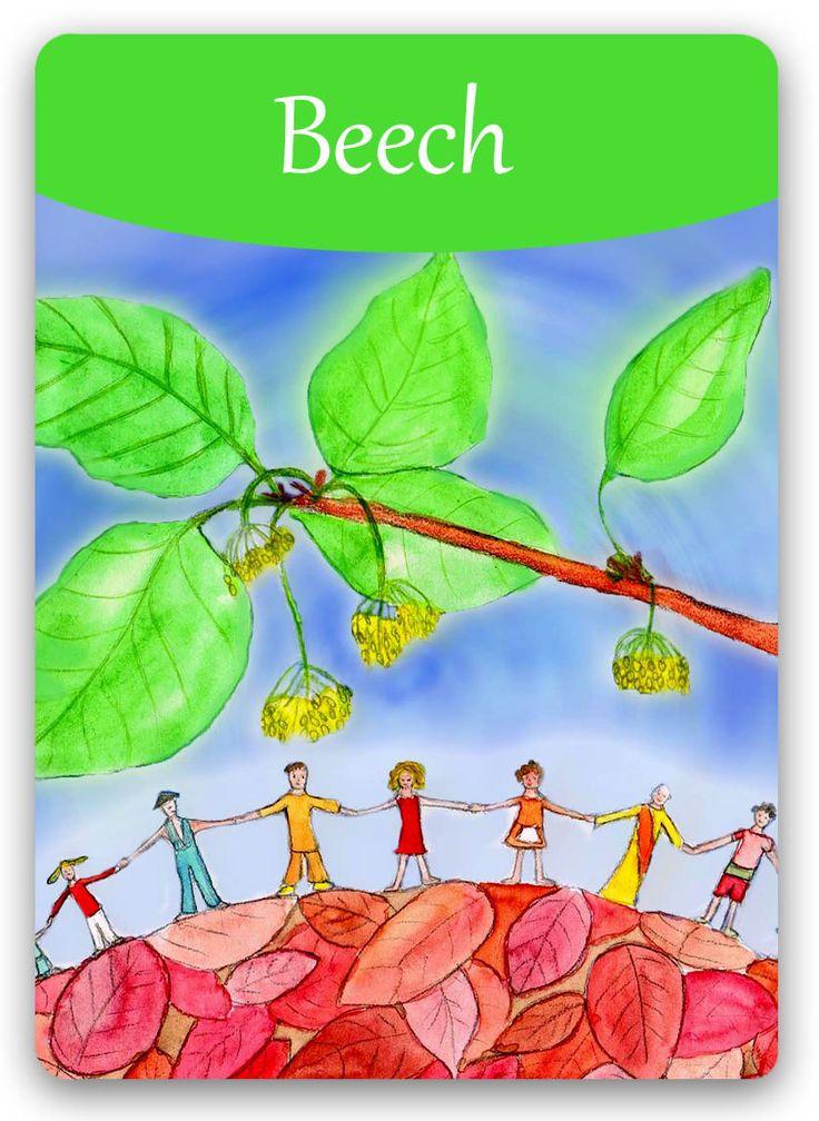 Bach Flower: Beech