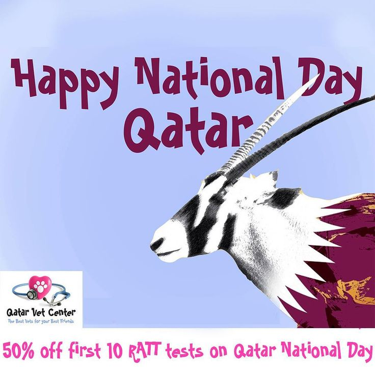 Wishing the beautiful Nationals and residents of Qatar a very happy National Day. We are so proud to be part of the amazing community.  Qatar Vet Center will be open today in both locations so that the animals of Qatar continue to receive the love and care they deserve . . #qatarvetcenter  #qvc #bestvet #cat #dog #saluki #petstagram #adoptdontshop #spay #neutered #vaccination #doha #qatar #iloveqatar #celebrate #vetlife #veterinarian #vet #petshop #petgrooming #weloveanimals
