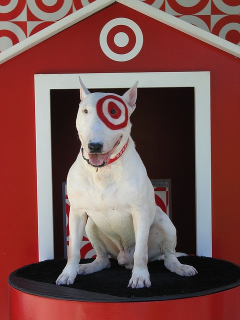 Target 39 s mascot bullseye cute pinterest photos What kind of dog is the target mascot
