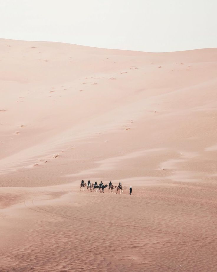 Sahara Desert Camel Caravan // Travel Photography from Carley Rudd
