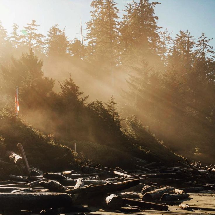 Tofino sunsets are definitely worth an early morning wake up call. Photo by: craigletourneauphotograph via IG