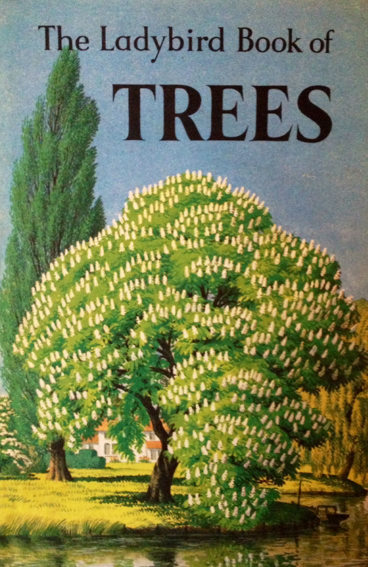 """""""The Ladybird Book of Trees"""" by Brian Vesey-Fitzgerald. Illustrated by Stanley Roy Badmin, 1963"""